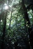 Regenwoud in Krabi in Thailand Royalty-vrije Stock Afbeeldingen