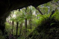 De bomen van de varen in holingang, Nieuw Zeeland Stock Foto