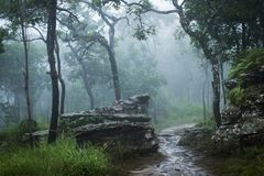 Regenwoud met mist, mist Stock Foto