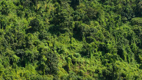 Regenwoud in Myanmar Royalty-vrije Stock Afbeeldingen