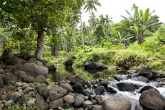 Regenwoud op Cook Islands Stock Afbeelding