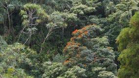 Regenwoud op de weg aan Hana stock video