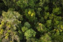Regenwoud op de weg aan Kuranda Royalty-vrije Stock Foto's