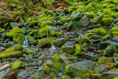 Regenwoud in Oregon Stock Afbeeldingen
