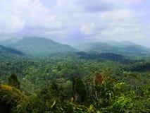 Regenwoud in Taman Negara, Maleisië Royalty-vrije Stock Foto