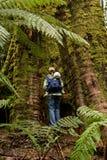 Regenwoud in Tasmanige Royalty-vrije Stock Afbeelding