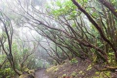 Regenwoud in Tenerife Stock Foto's