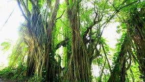 Regenwoud uit de Amazone, Brazilië stock videobeelden