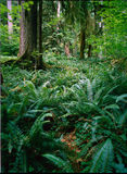 Regenwoud, Washington stock foto