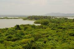 Regenwoud in wateren, op Rio Negro in het Stroomgebied van Amazonië wordt weerspiegeld, Brazilië, Zuid-Amerika dat stock fotografie
