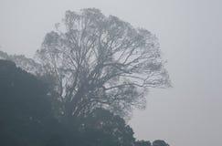 Regenwoud in Zuid-India Stock Foto