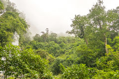 Regenwouden en wolk Royalty-vrije Stock Afbeelding