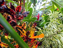 Regenwoudinstallaties, Costa Rica stock afbeeldingen
