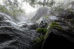 Regenwoudmuren royalty-vrije stock afbeeldingen