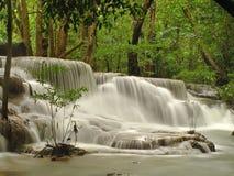 Regenwoudwaterval Stock Foto