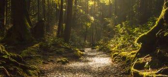Regenwoudweg Stock Afbeelding