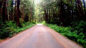 Regenwoudweg die zich langzaam door Oude de Groeibomen bewegen Stock Afbeeldingen