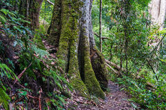 Regenwoudweg Wandeling in tropisch regenwoud royalty-vrije stock afbeelding