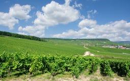 Região de Champagne, Oger, Epernay, França foto de stock royalty free