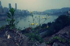 A região de flores selvagens Fotografia de Stock