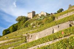 Região de Lavaux Fotografia de Stock Royalty Free