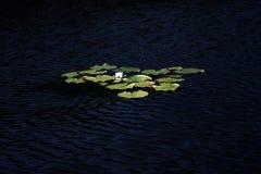 Região de Linevo Omsk do lago da Federação Russa Foto de Stock Royalty Free