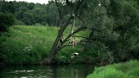 REGIÃO DE MOSCOU, RÚSSIA - 24 DE JUNHO DE 2017 O movimento lento disparou de um menino que salta fora da árvore no rio Férias de  filme