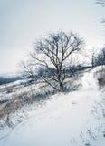 Região de Stavropol Imagem de Stock