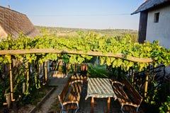 Região do vinho de Balaton, Hungria foto de stock