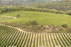 Região do vinho de Chianti, Toscânia. Fotografia de Stock Royalty Free