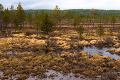 Região pantanosa e charneca fotografia de stock royalty free