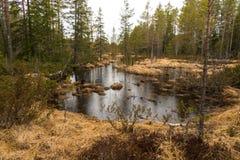 Região pantanosa e charneca Imagens de Stock