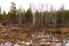 Região pantanosa e charneca Imagem de Stock