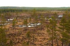 Região pantanosa e charneca Foto de Stock