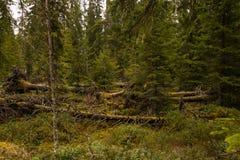 Região pantanosa e charneca Fotografia de Stock