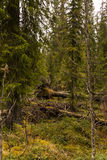 Região pantanosa e charneca Fotos de Stock Royalty Free
