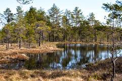 Região pantanosa e charneca Fotos de Stock