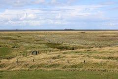 Região pantanosa em Hallig Groede imagens de stock