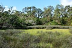 Região pantanosa em St Augustine Imagens de Stock
