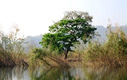 Região pantanosa gramínea Foto de Stock
