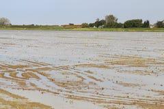 Região pantanosa no Camargue, pequeno Peloux, França Imagens de Stock