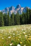 Região selvagem canadense Fotos de Stock Royalty Free