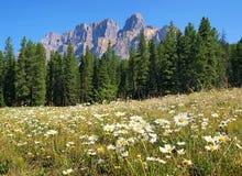 Região selvagem canadense no parque nacional de Banff, Canadá Fotografia de Stock