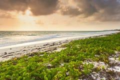 Região selvagem da praia de Zanzibar no por do sol imagens de stock