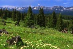 Região selvagem Montanhas Rochosas fotos de stock royalty free