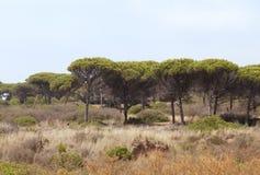 Região selvagem na Espanha fotografia de stock royalty free