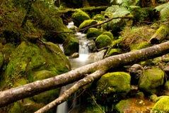 Região selvagem selvagem Imagem de Stock Royalty Free
