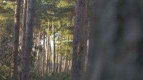 Região selvagem verde densa do tiro da natureza dos troncos de árvore da floresta filme