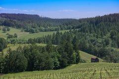 Região vinícola de Oregon imagem de stock royalty free