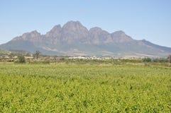 Região vinícola de Stellenbosch África do Sul fotos de stock royalty free